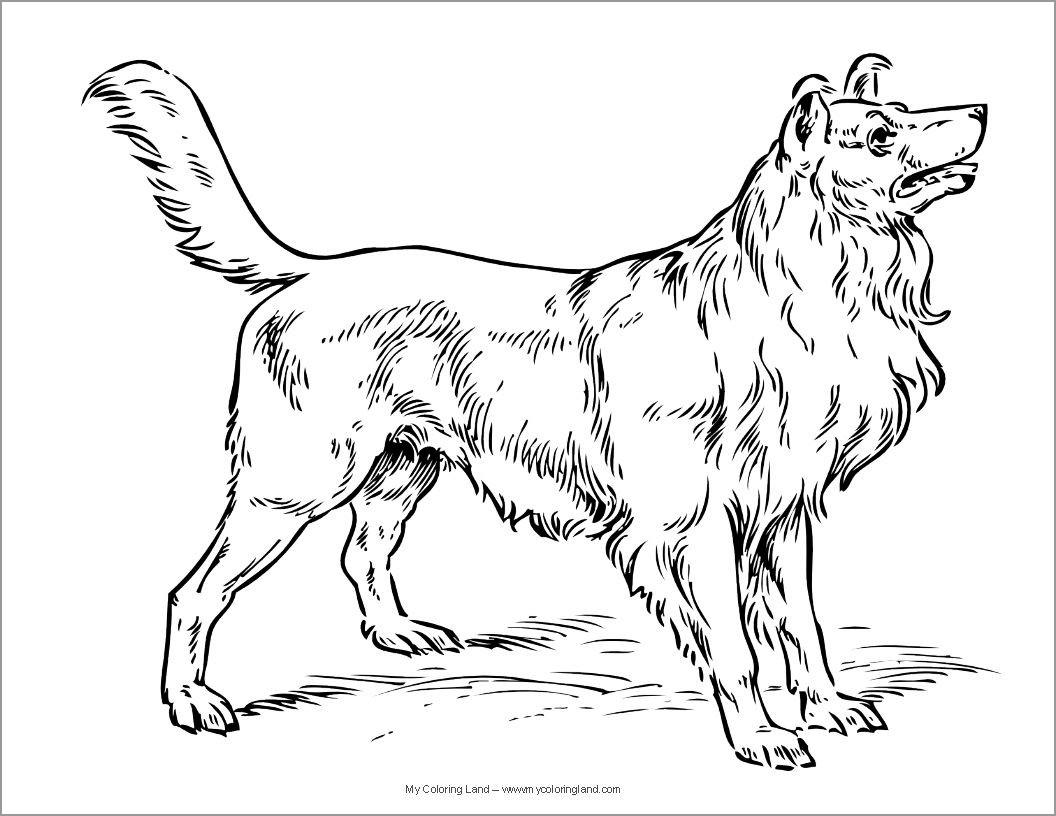 Realistic Labrador Coloring Page