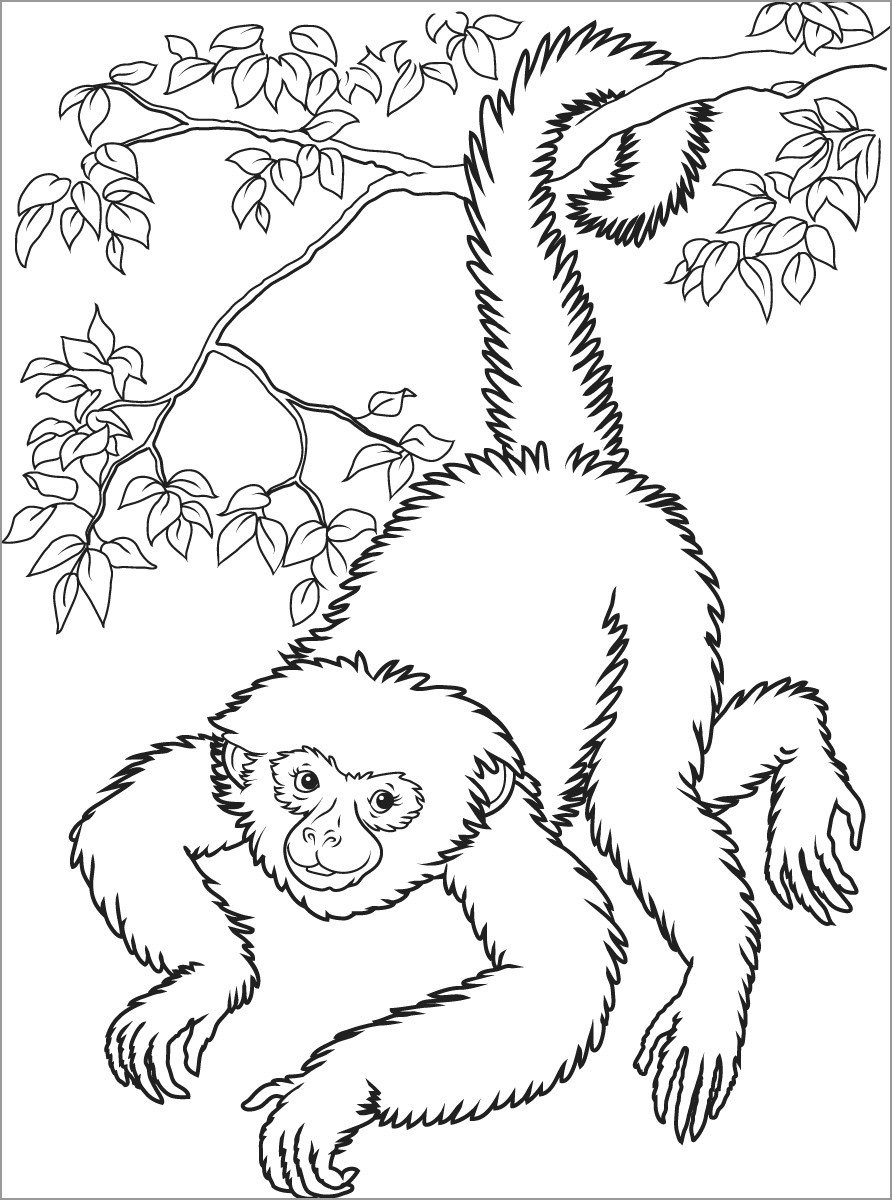 Realistic Monkey In A Tree Coloring Page