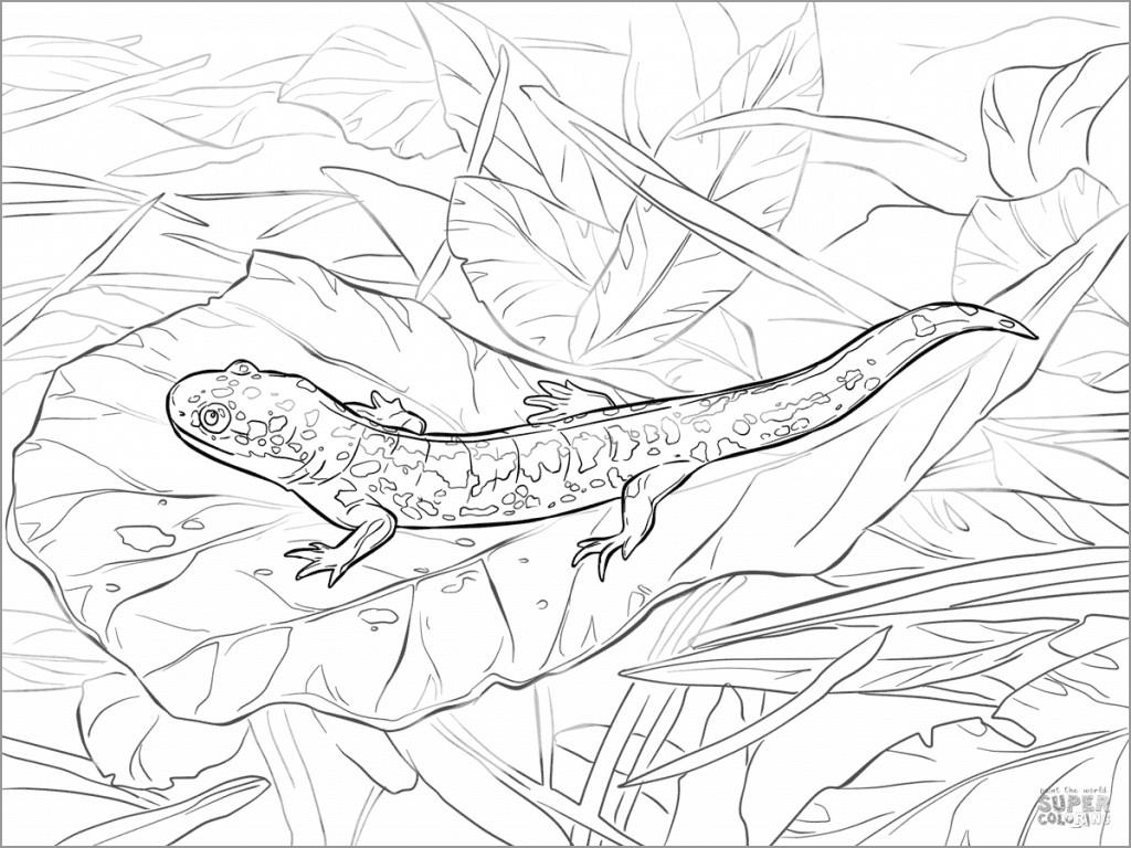 Realistic Salamander Coloring Page