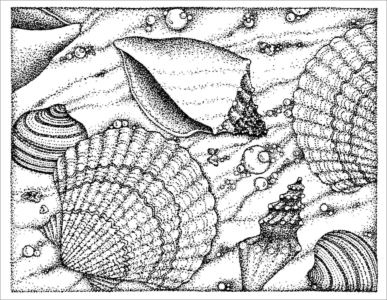 Realistic Seashell Coloring Page