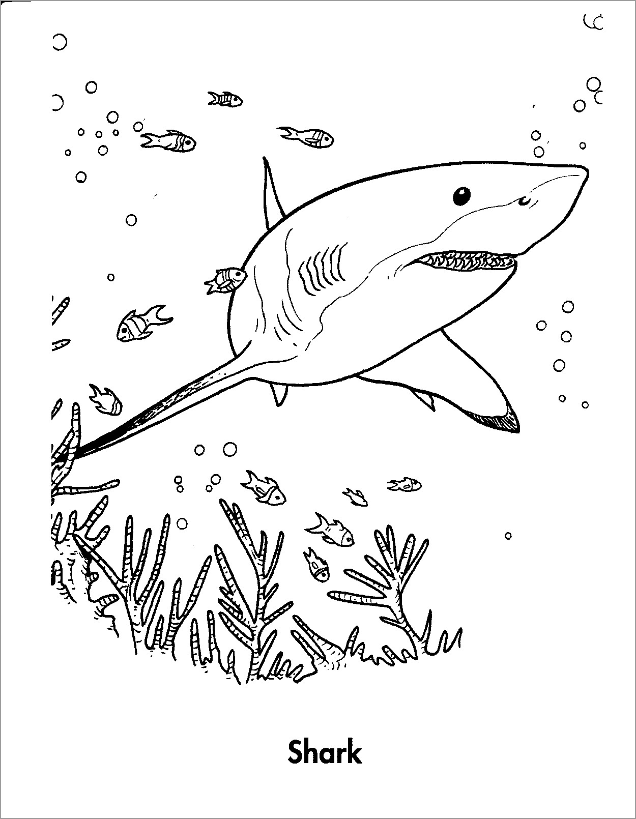 Shark Coloring Pages - ColoringBay