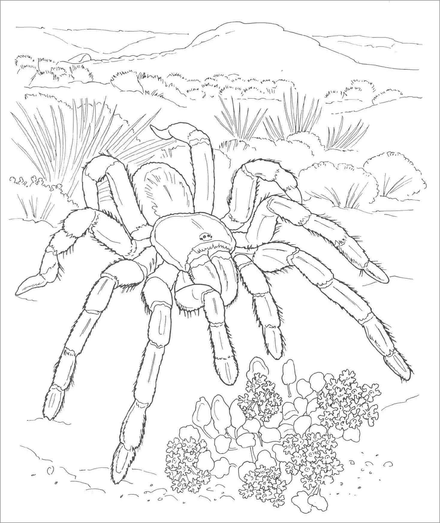 Realistic Tarantula Coloring Page