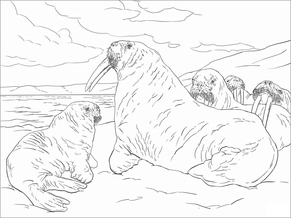 Realistic Walrus Coloring Page