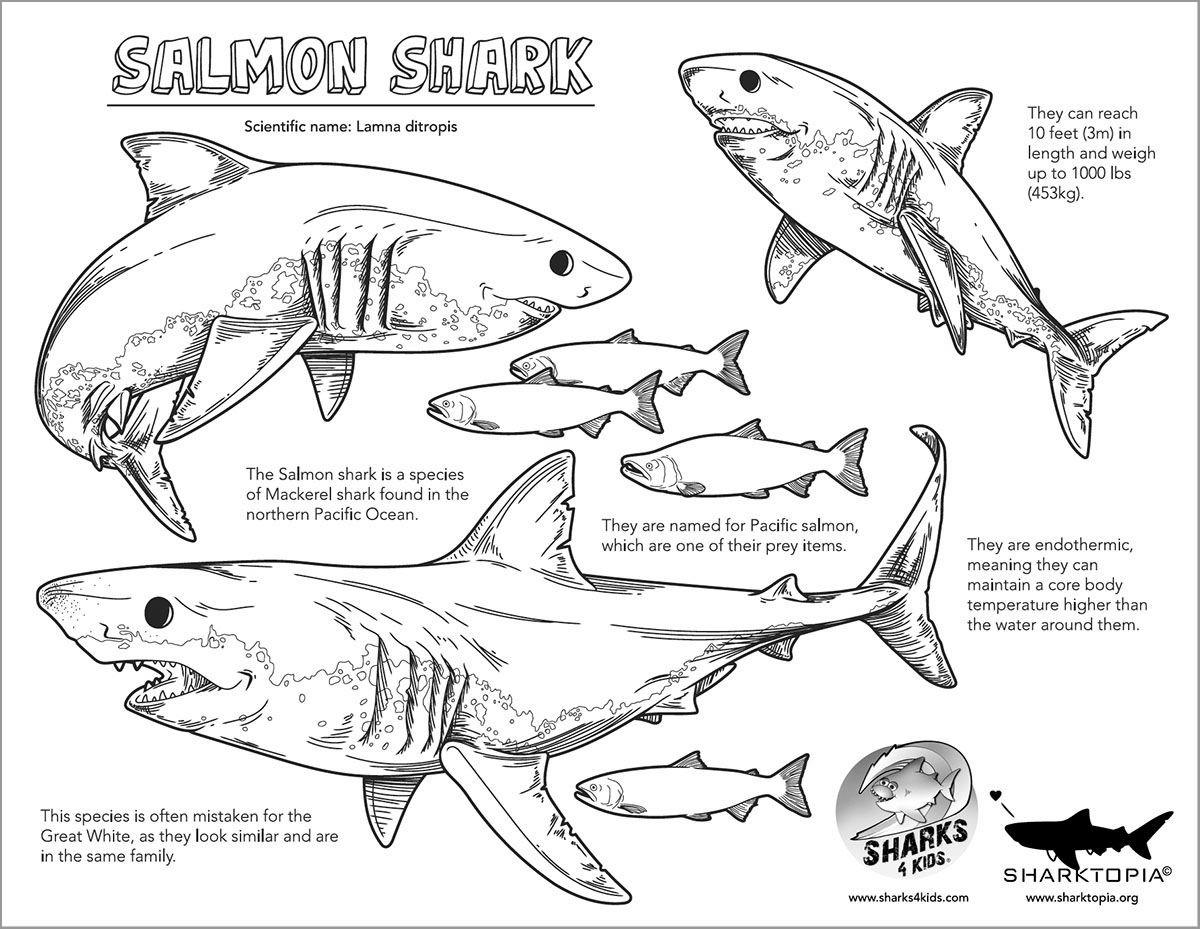 Salmon Shark Coloring Page