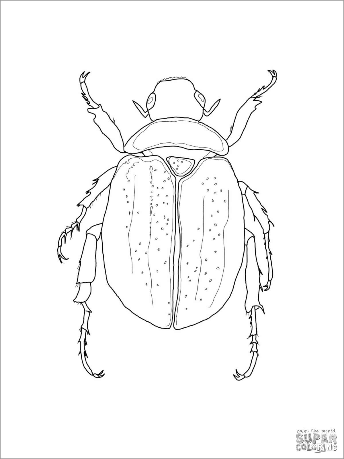 Scarab Beetle Coloring Page