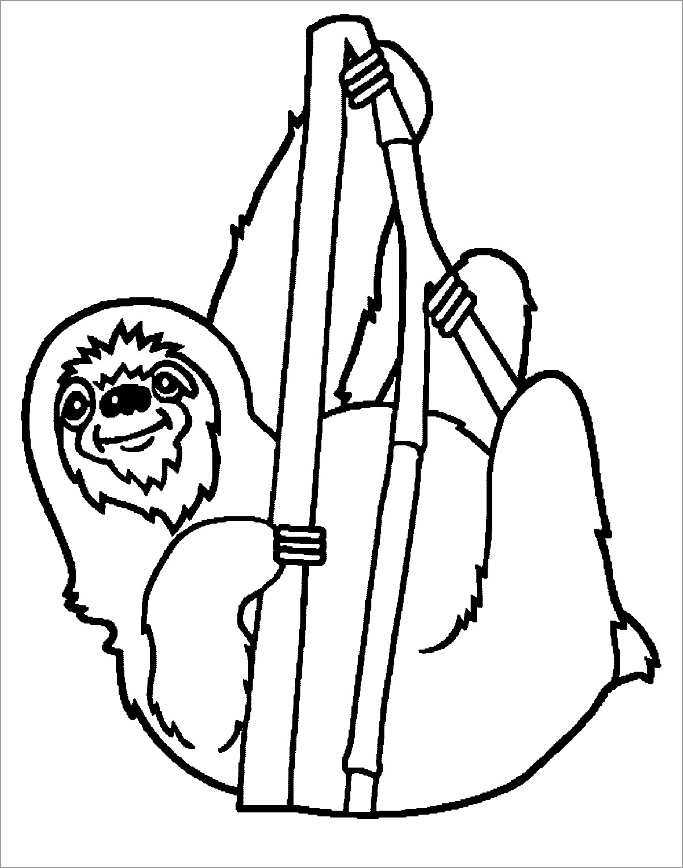 Simple Sloth Coloring Page for Preschool