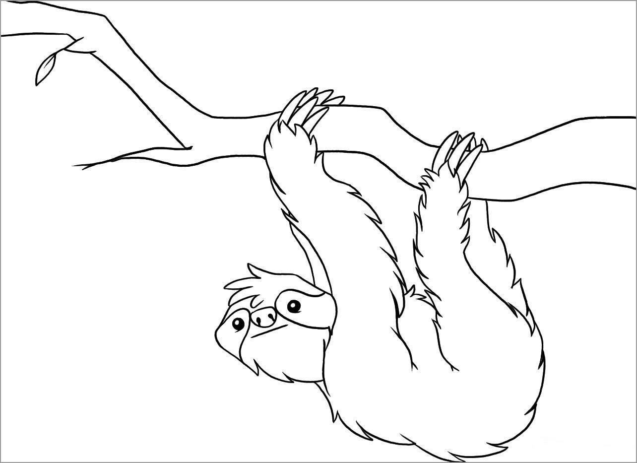 Sloths Coloring Page for Kindergarten
