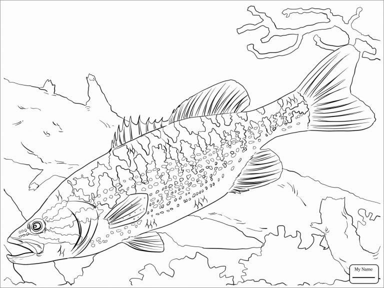 Spotted Bass Coloring Page - ColoringBay