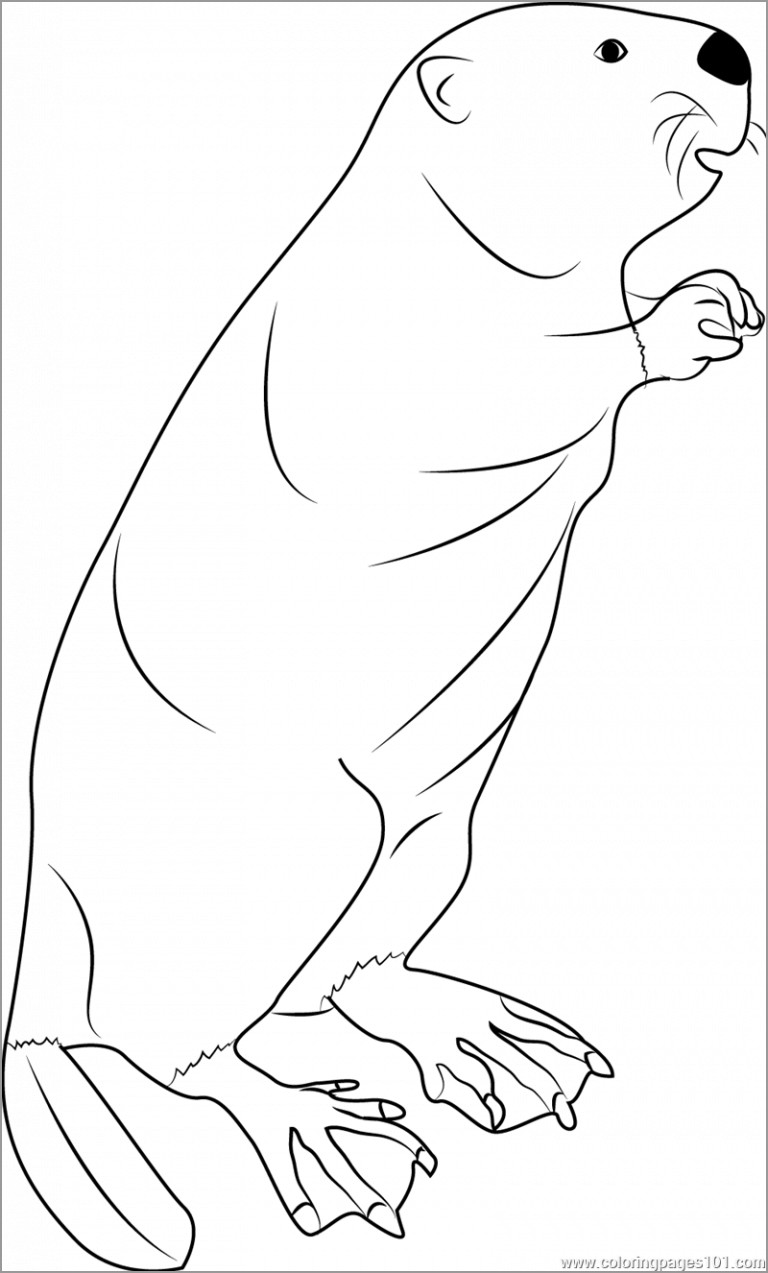 Standing Beaver Colouring Page