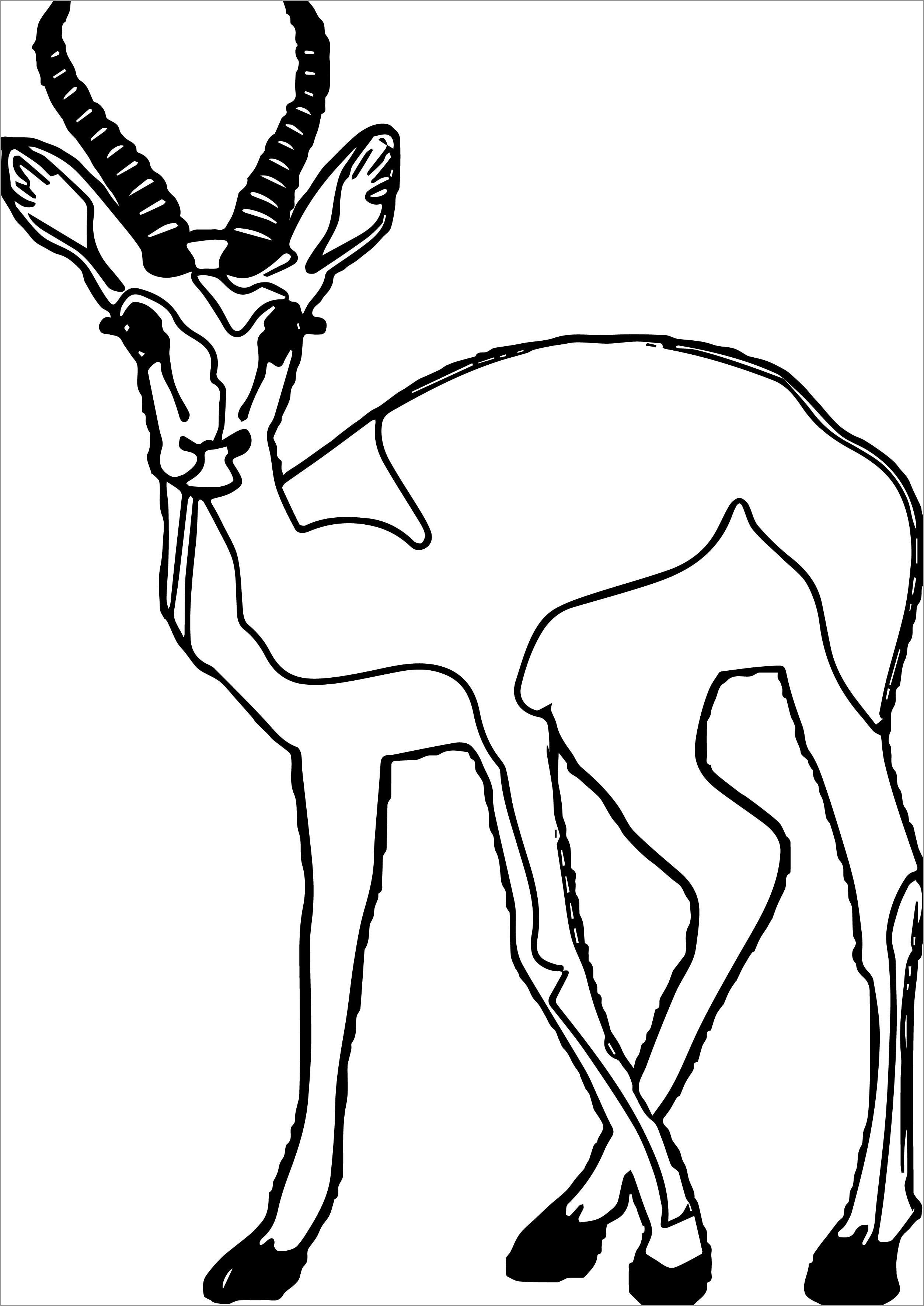 Staring Antelope Coloring Page