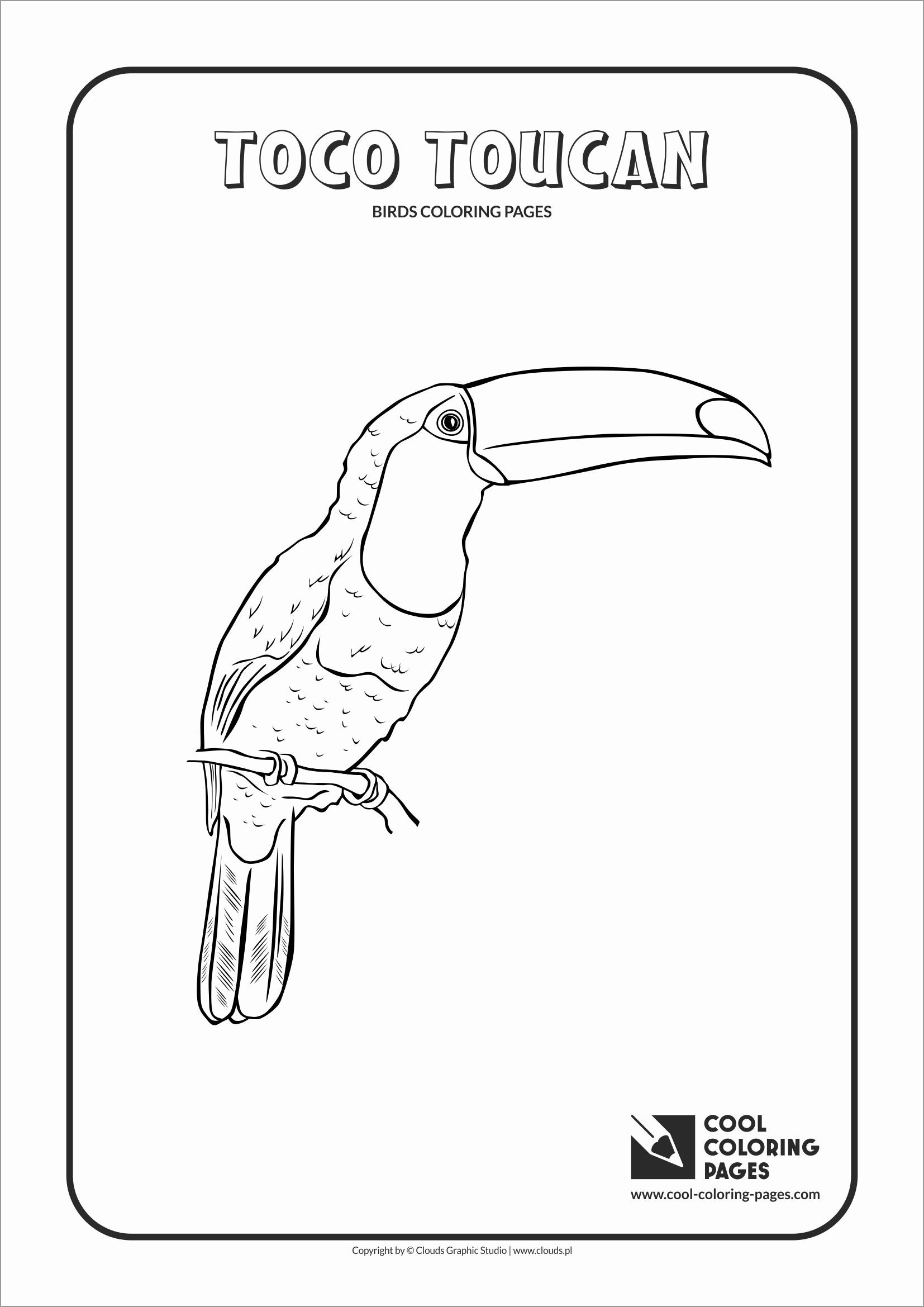 Toco toucan Coloring Pages