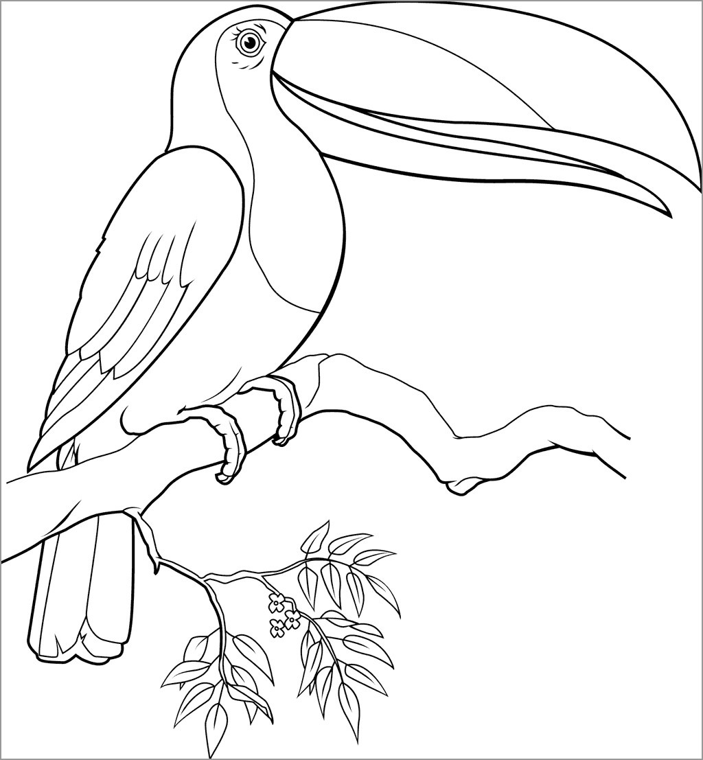 Toucan Bird On the Tree Coloring Page