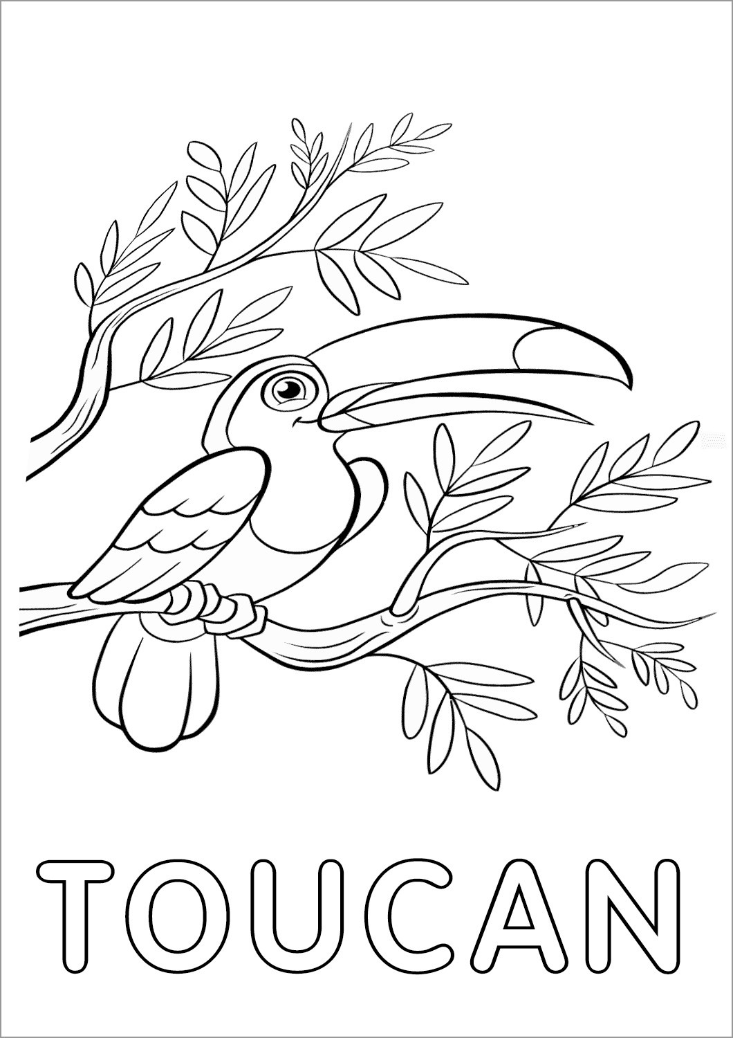 Toucan Coloring Page Printable