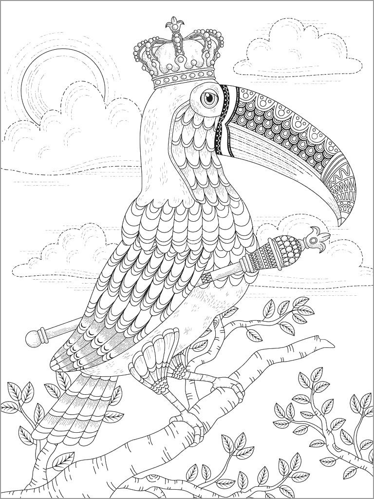 Toucan Coloring Pages for Adult