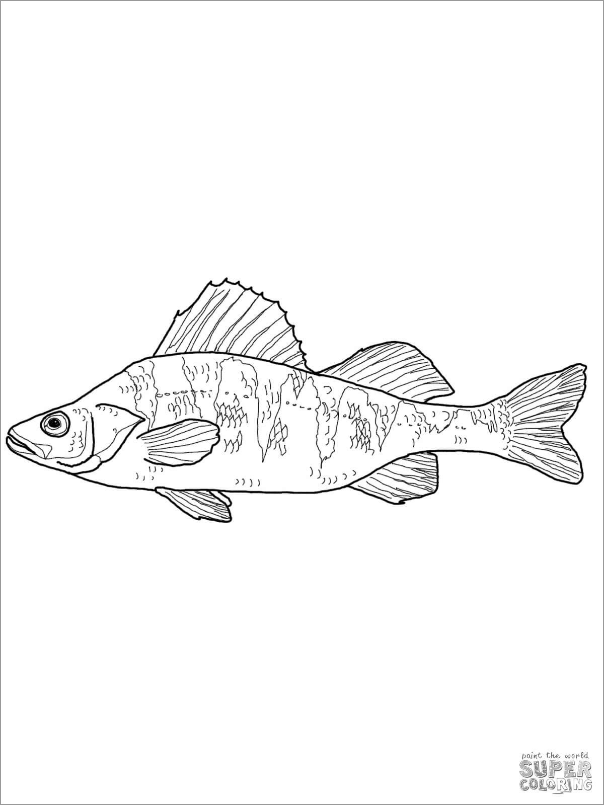 Yellow Perch Coloring Page