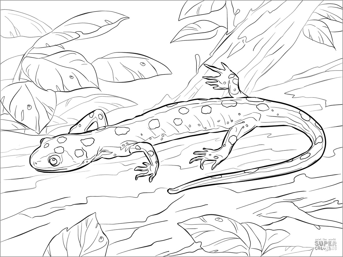 Yellow Spotted Salamander Coloring Page