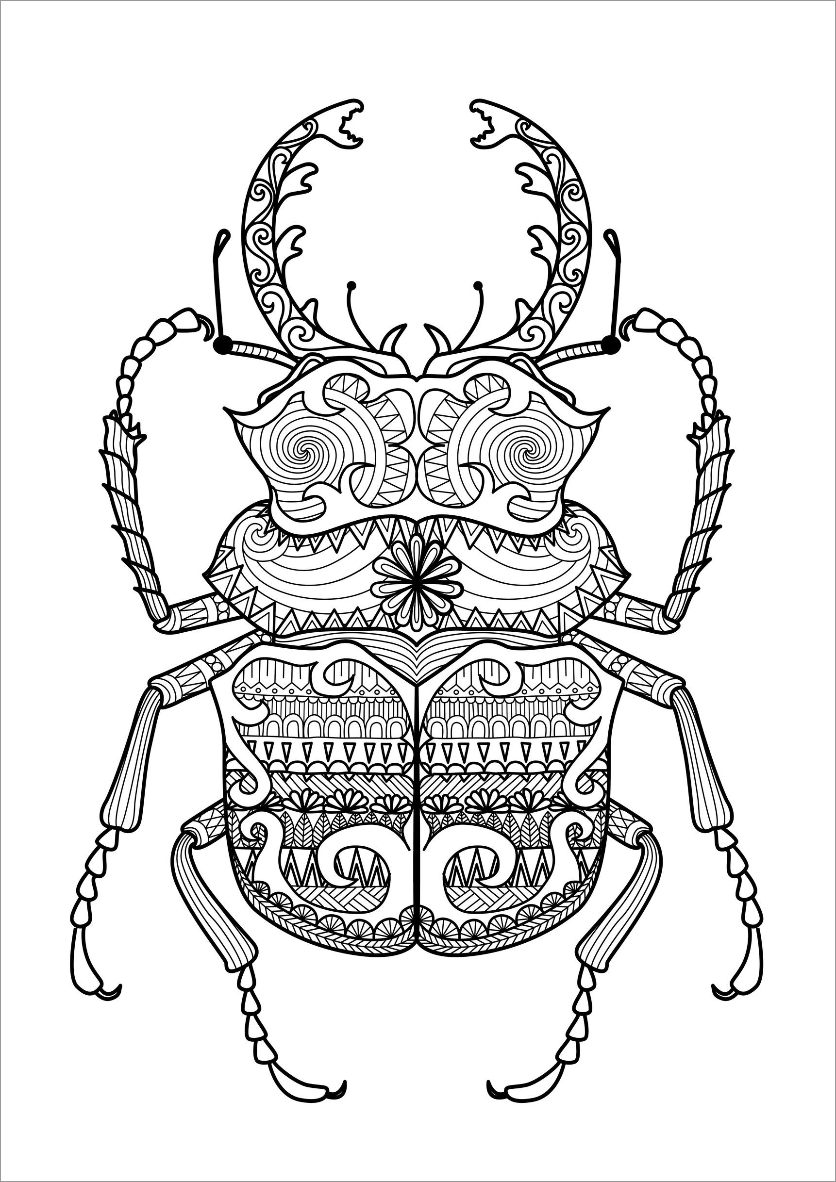 Zentangle Beetle Coloring Pages for Adult
